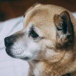 愛犬の仕草