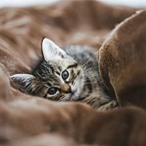 拾われて優しい猫